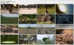 Król krokodyli / Crocodile King (2010) PL.720p.HDTV.x264 / Lektor PL