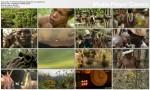 Plemienne Rytua³y / Tribal Rites (2003) PL.TVRip.XviD / Lektor PL