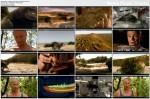 Prehistoryczne bestie / Mega Beasts (2010) PL.TVRip.XviD / Lektor PL